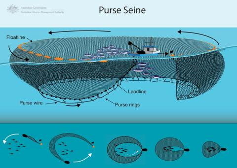 Purse Seine Bycatch Management Information System Bmis